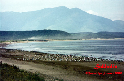 Photograph of the  Island of Sakhalin on the Shore of the Sea of Okhotsk by Gwendolyn Stewart,  c. 2013; All Rights Reserved